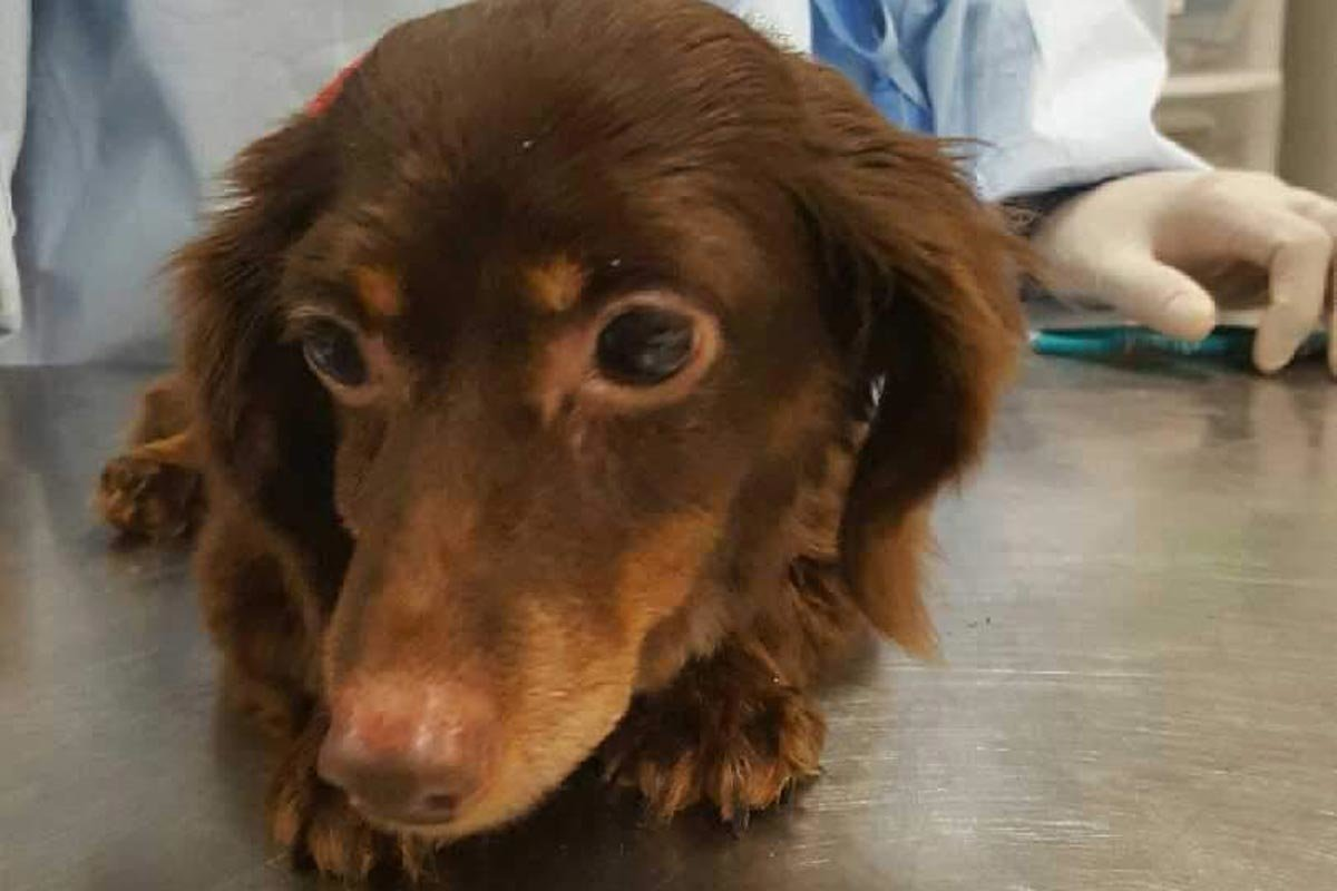 Shelter Seeks Answers After Dog Found In Garbage Bag