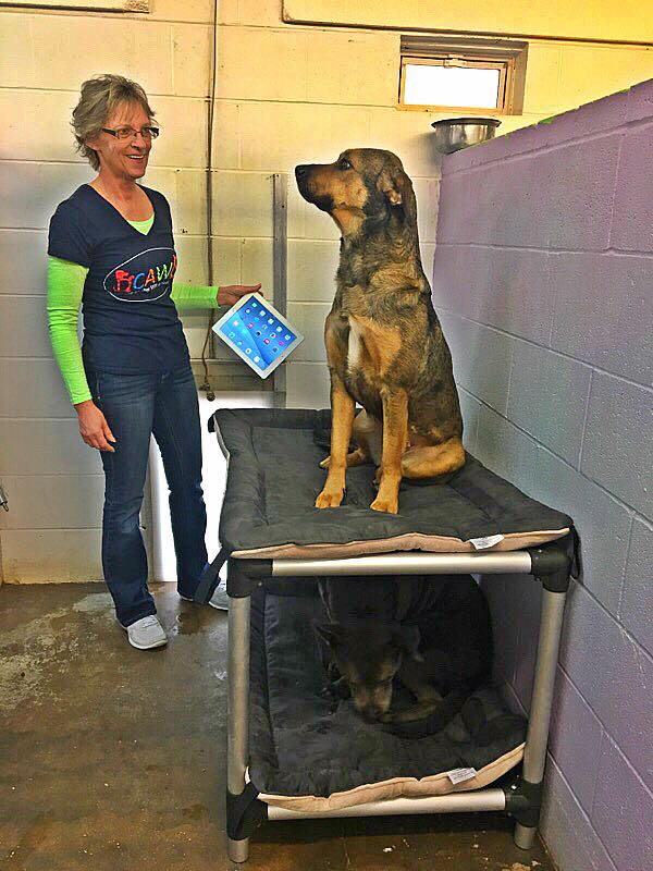 One Dog's Adoption Spurred Family to Donate Kuranda Beds to All the Dogs at the Shelter