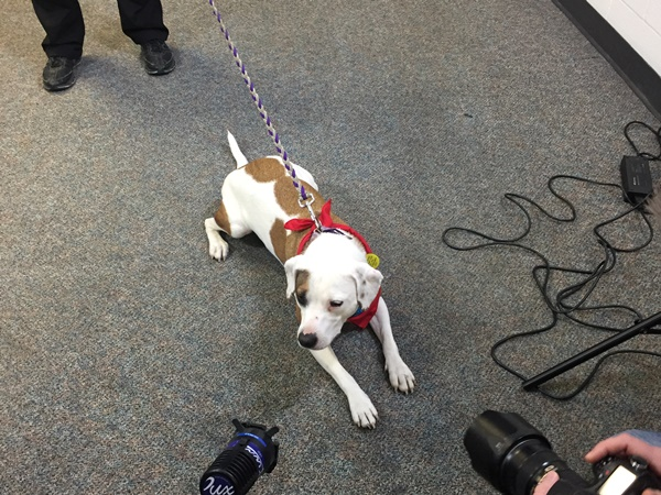 Rescue Dog Will Help Reduce Stress for the Police Department, As Well As Victims of Traumatic Events