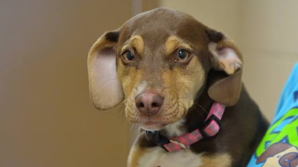 Formerly Abused Dog Helps Save Little Girl's Life