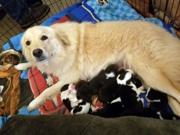 Dog Who Lost Her Litter in a Fire Finds Comfort in Raising Orphaned Puppies