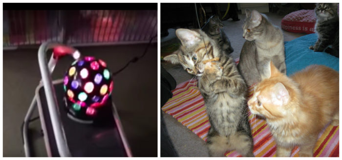 Shelter Turns Cat Room Into Kitty Disco
