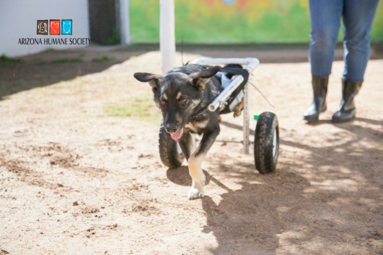 Shelter Builds Wheels For Paralyzed Dog Who Was Found Abandoned In Desert