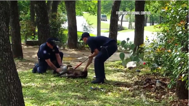 Residents and Animal Control Team Up To Save 'Jar Head' Dog