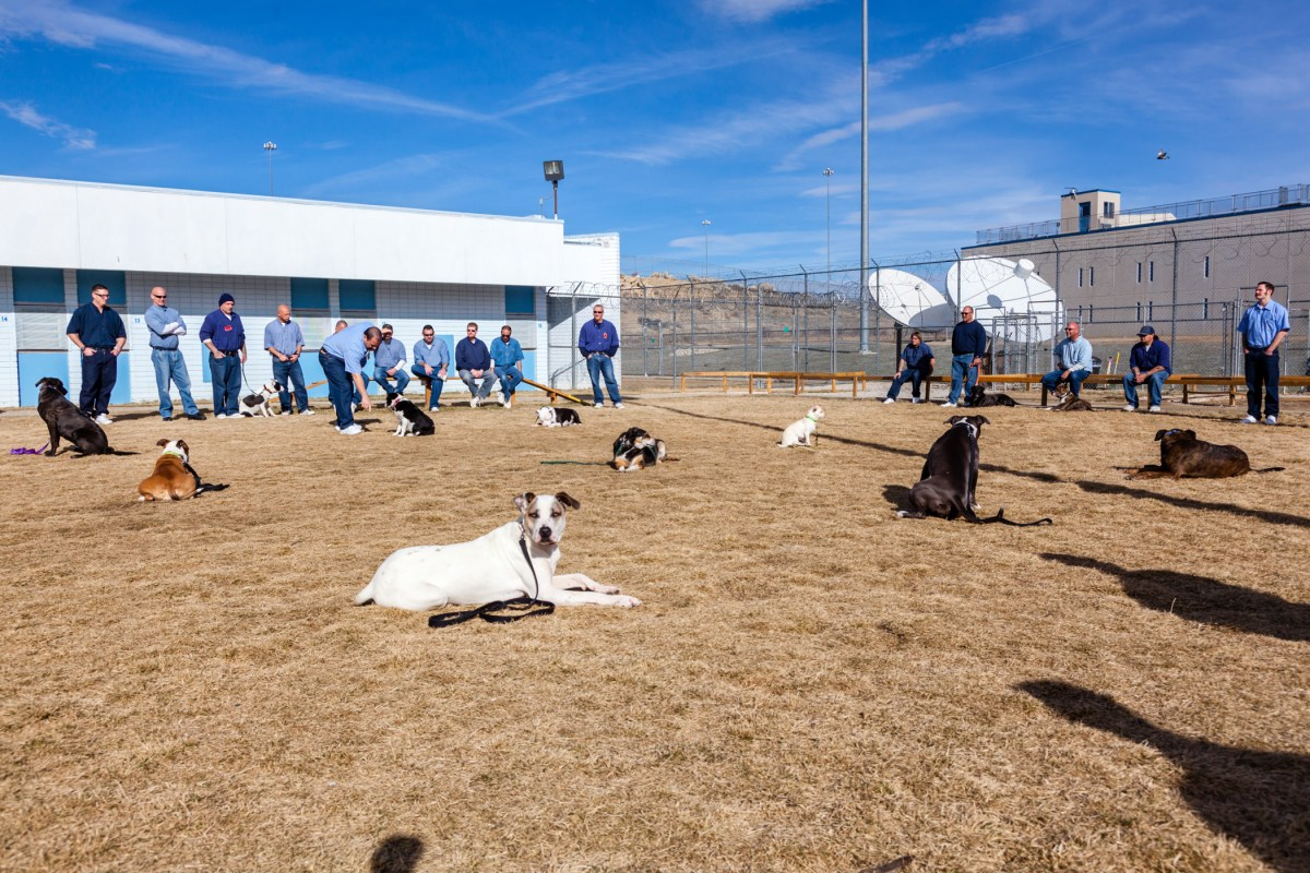 Correctional Facility Implements Program For Inmates To Foster Displaced Dogs