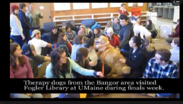 Therapy Dogs Visit Stressed College Students During Finals Week