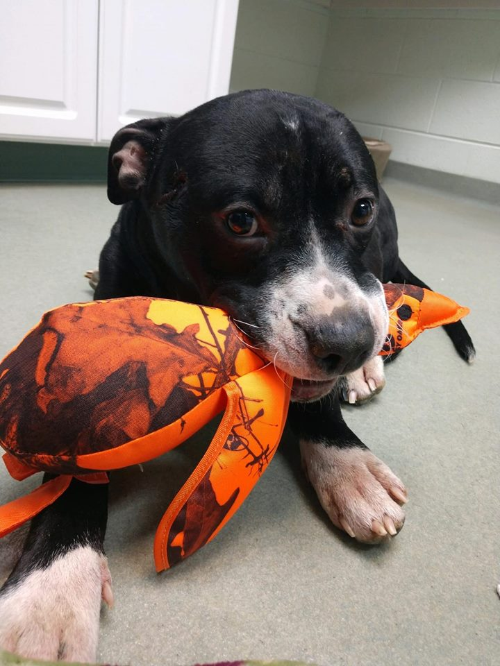 Community Rallies Around Miracle Dog Who Was Shot And Abandoned In The Snow