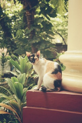 Filed under: Cats of UPM