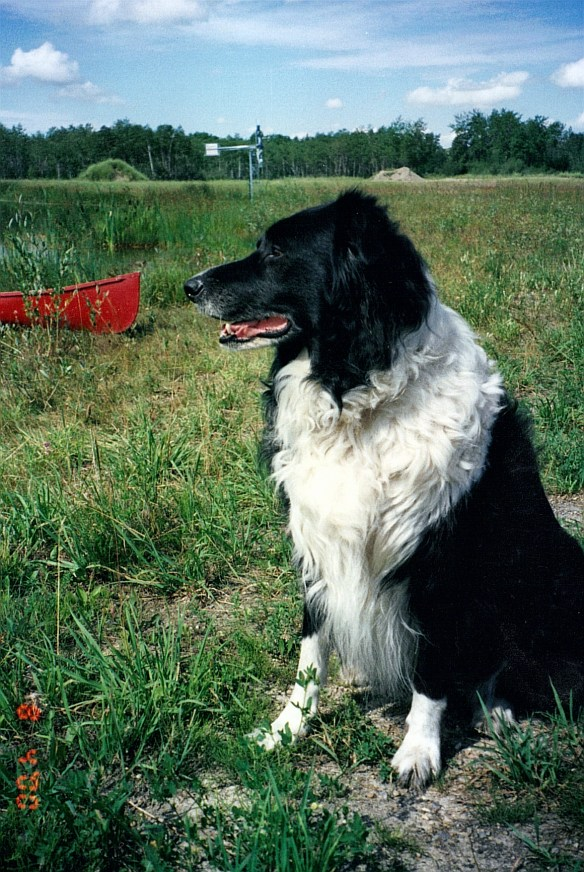 Laurie Dog 2002