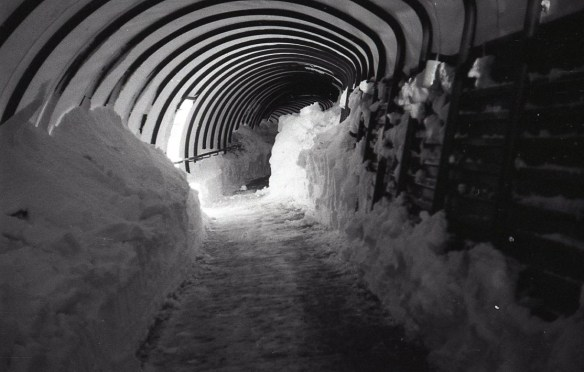 The Worm Winter Storm 1977