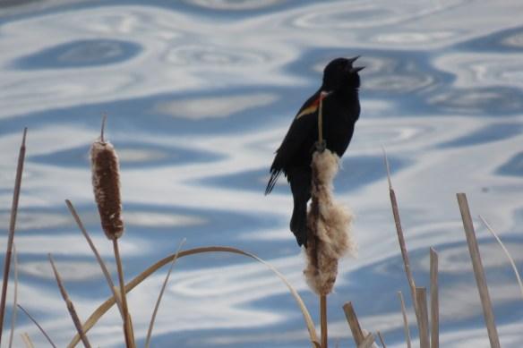 Kath's Canon April 11, 2016 Shibori and Black Bird and Crow 057