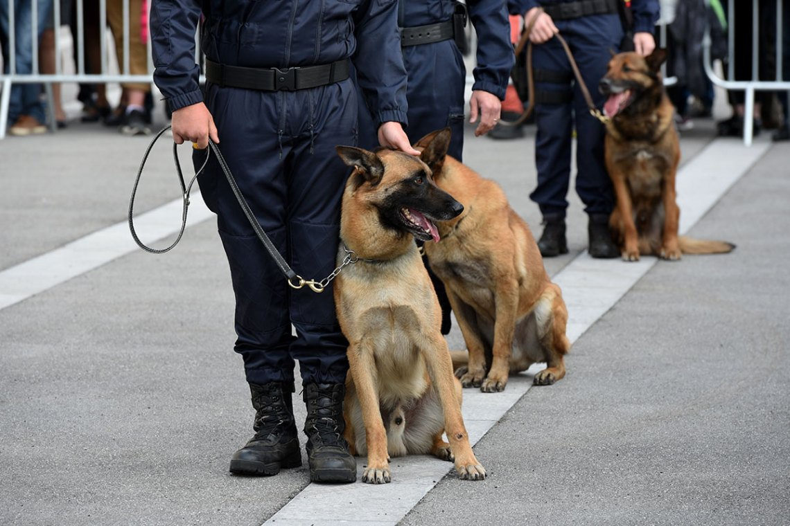 Types Of Police Dogs