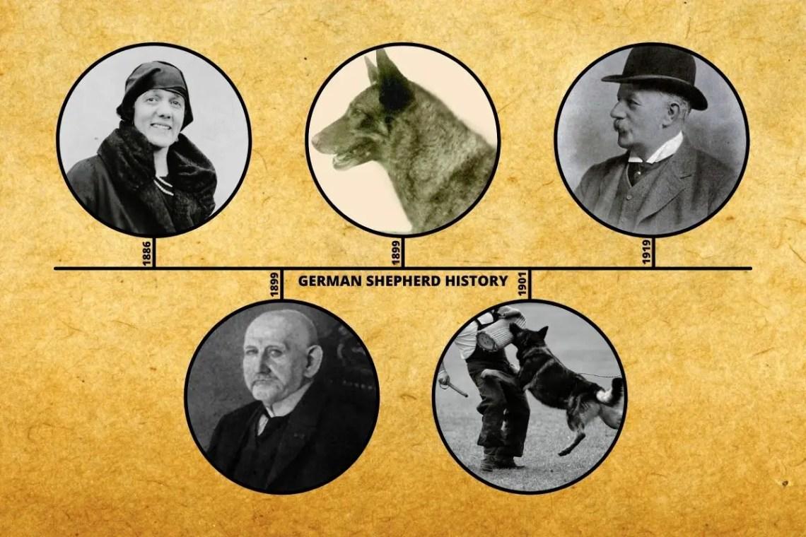 German Shepherd History Timeline