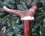 Elk Antler coronet with a top end cap of Mulga set onto Granny Smith Apple shank 36 ins long sold