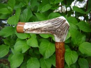 Elk antler handle with Oak end cap, set onto a Olive shank, a gents walking stick 37ins or 940mm