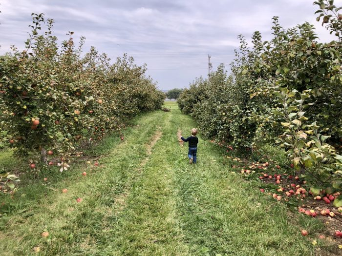 Frugal Fun Apple Orchard Visit with Toddler Running