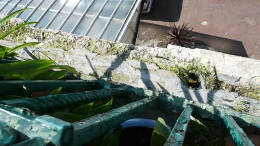 collapsing-balcony-edge