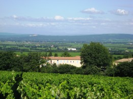 One of many vineyard scenes along the way