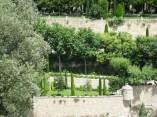 Gordes - poplars in the Italian Garden
