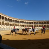 The Equestrian School practises in the bullring