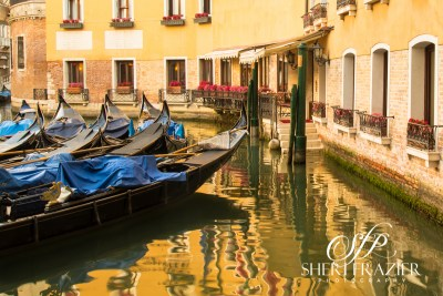 Venice Gold | Sheri Frazier Photography