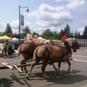 Horses at Festival