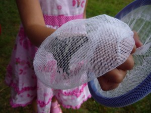 Look at this - A black and white butterfly