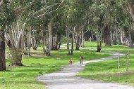 Nivelet e stresit ndikohen nga sasia e hapësirës së gjelbër
