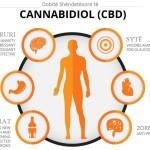 CBD Është Ushqimi më i mirë Anti-Inflamator, Anti-Kancerogjen dhe Anti-Ankth që nuk po përdorni