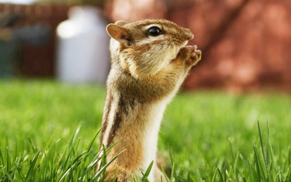 Beautiful Animals Wallpapers HD Desktop Widescreen Free ...