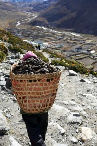 Poop hauled down to valley