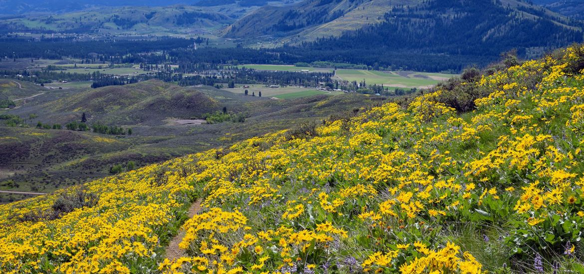 Methow Valley, Winthrop WA, wildflowers