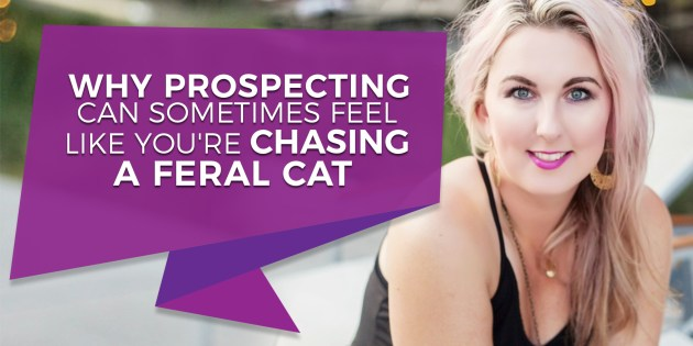 Why prospecting can sometimes feel like you're chasing a feral cat