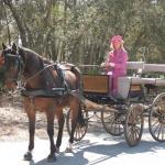 Horse Farms In Citrus County Horse Ranch For Sale In Floral City Horse Farms For Sale In Citrus County Florida Sherri C Parker Assoc Realtors