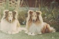 Sheba and Jodi