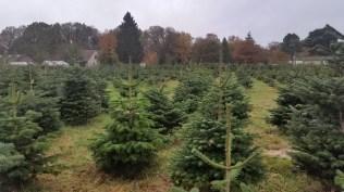 Christmas Tree Farm Nov 2015 (2)