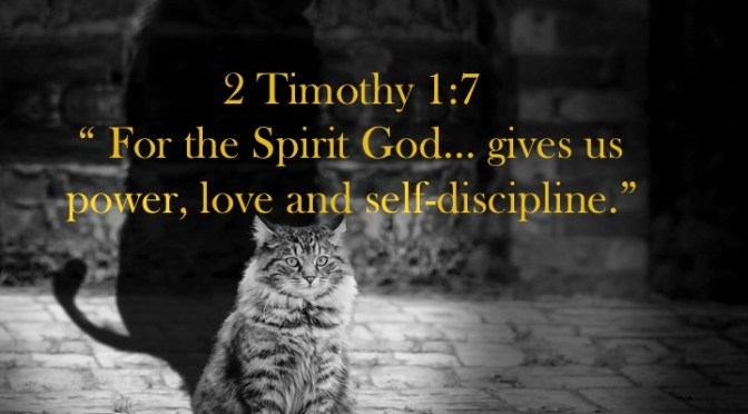 Week # 5 Wisdom Builder   2Timothy 1:7