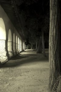 Trees, San Juan Bautista