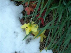 AFTER THE SNOW STARTED MELTING...