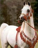 horse-emsm