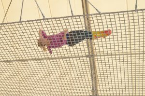the writer's safety net reduces risks for writers, just like the safety net for a trapeze artist