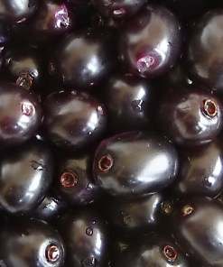 Buy Jamun fruit in Pakistan