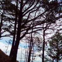Dear Baguio Visitors