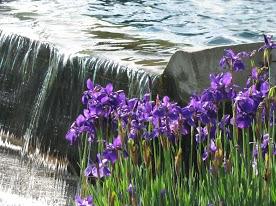 flowersIMG_2709