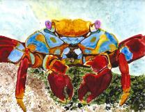 Sandy Lightfoot Crab