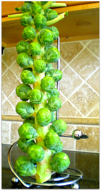 Cat Cora S Brussels Sprouts