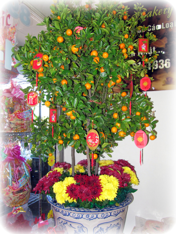 tangerine tree decorated with red envelopes for the Lunar New Year