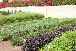 Herb Garden at Edwards Ranch Estates