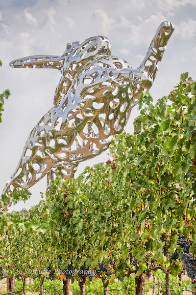 Hall Wines, Napa Valley | ShesCookin.com