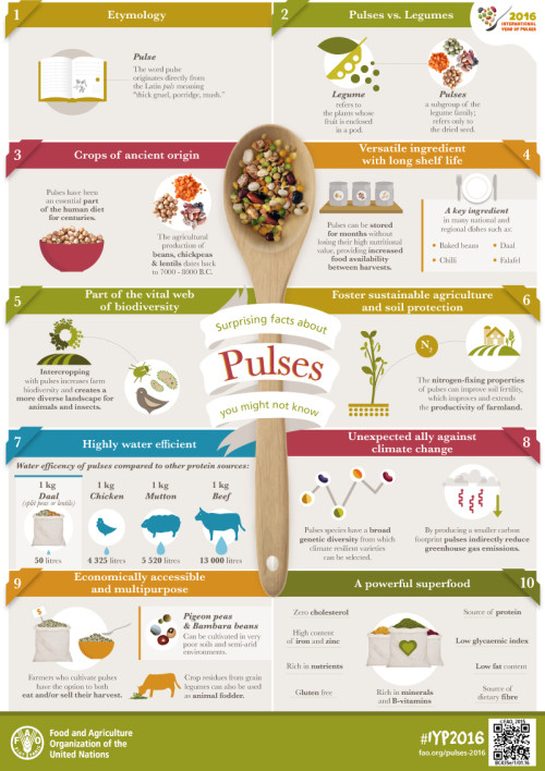 2016 Year of the Pulses Infographic | ShesCookin.com